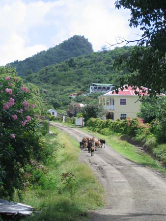 busy road in Carriacou